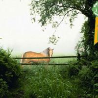Horse in the mist Animated Wallpaper (ใครรักม้า ชอบม้า ต้อง Wallpaper รูปม้า เหมือนจริง)