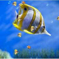Marine Life Aquarium Animated Wallpaper (วอลล์เปเปอร์ ภาพเคลื่อนไหว พิพิธภัณฑ์สัตว์น้ำมีชีวิต)