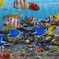 3D Fish School Screensaver (สกรีนเซฟเวอร์ โลกใต้น้ำ สามมิติงามๆ)