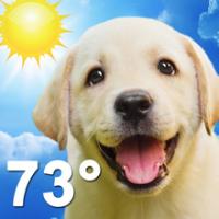 Weather Puppy (App ลูกหมาน้อย รายงานสภาพอากาศ)