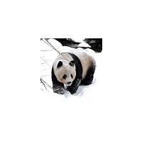 Panda Movie Maker :