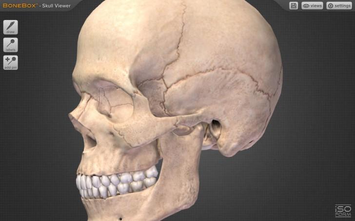 BoneBox Skull Viewer (โปรแกรม Skull Viewer ดูศีรษะ หัวกะโหลก 3D บนเครื่อง Mac ฟรี) :