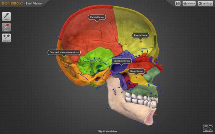 โปรแกรมดูกระดูกส่วนหัวกะโหลกBoneBox Skull Viewer