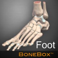 BoneBox Foot Viewer (โปรแกรม BoneBox Foot Viewer ดูกระดูกส่วนเท้า ข้อต่อกระดูก 3D บน Mac ฟรี)
