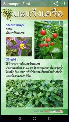 App รวมข้อมูลสมุนไพรไทย SamunpraiFirst