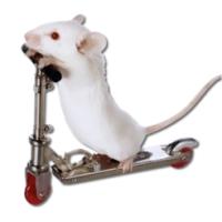 MouseX (โปรแกรม MouseX นับจำนวนคลิก Mouse หรือ Trackpad บน Mac)